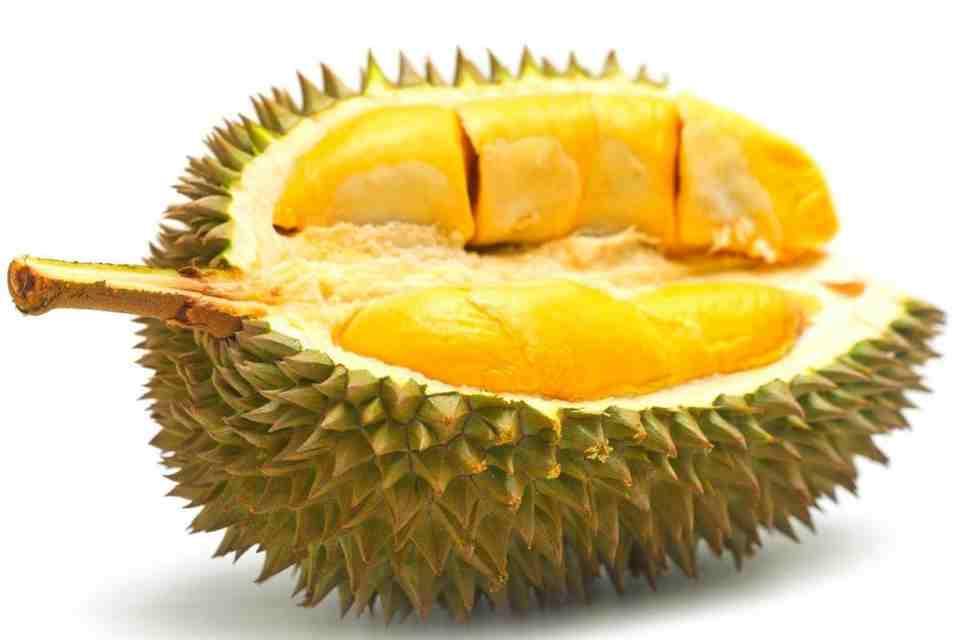 Durian une chair onctueuse et parfumée