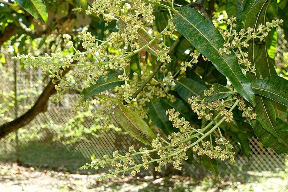 Le kuweni - Fleurs